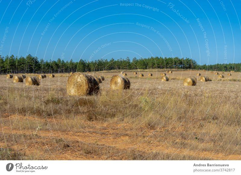 Feld mit Weizenballen, die in den Bergen in der Sonne trocknen Müsli niemand Wiese Gerste Schönheit Korn natürlich Ballen Französisch Himmel Europäer Sommer