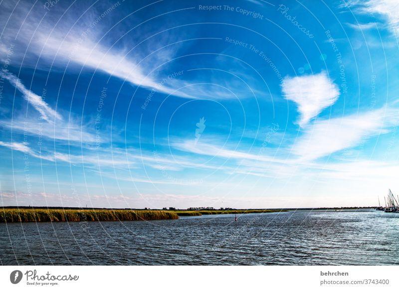 boddenzauber weite Sehnsucht Fernweh träumen blau Himmel Ostsee Darß Meer Strand Wellen Wasser Natur Landschaft Küste Farbfoto Außenaufnahme