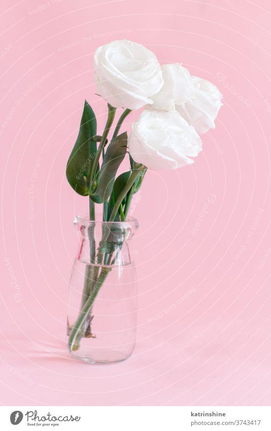 Weiße Blume in einem Glasgefäß Roséwein weiß Wasser romantisch rosa hellrosa Pastell weiche Farbe abschließen Konzept kreativ Tag Dekor Dekoration & Verzierung