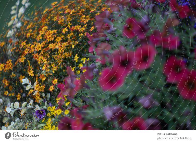 Bunter Blumenstrauss im Garten Pflanzen gelb rot Natur Blühend Gartenblume bluten weiß natürlich grün Unschärfe Blumenwiese Gras Nahaufnahme Außenaufnahme
