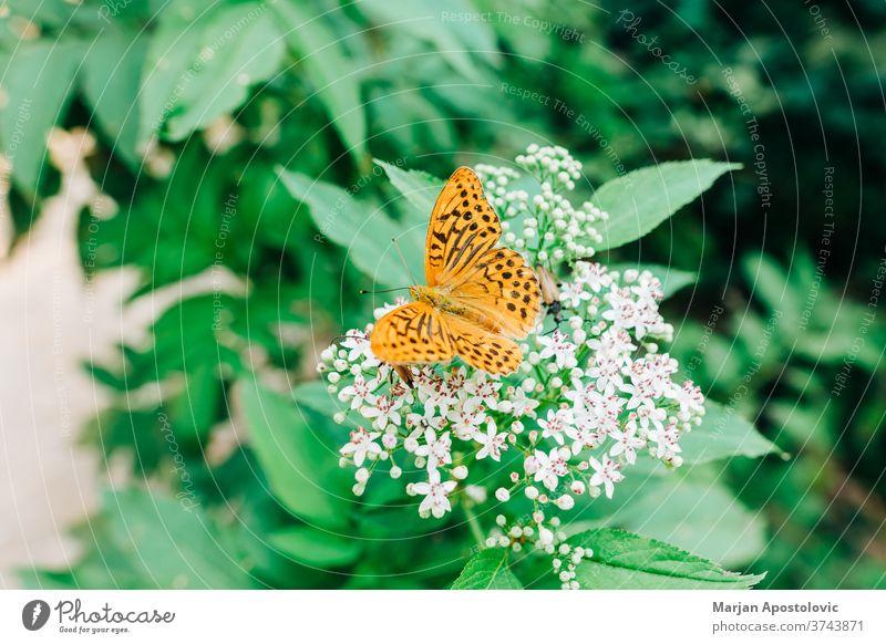 Wunderschöner oranger Schmetterling auf der grünen Pflanze Tier Hintergrund Schönheit Blütezeit botanisch Botanik Nahaufnahme farbenfroh Detailaufnahme Punkte