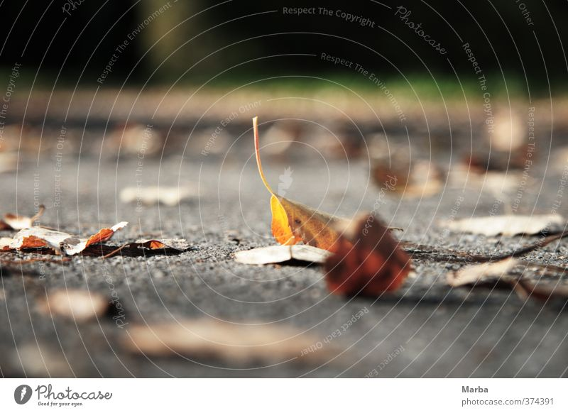 liegengeblieben Umwelt Natur Pflanze Herbst Wetter Blatt Wegrand fallen natürlich unten braun gelb grau achtsam ruhig Schmerz Ende Vergänglichkeit Bodenbelag