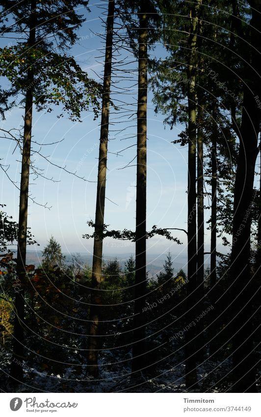 Eine Baumgruppe mit Jungwald und ganz viel Landschaft Baumstamm Wald Natur Himmel Umwelt Hügel Menschenleer Schönes Wetter Schatten Ast