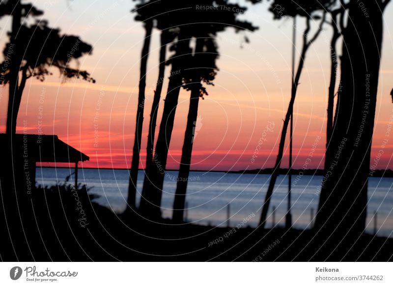 Sonnenuntergang an der Ostsee. Dämmerung. Kieferwald mit Baum Silhouetten. Sommerurlaub. Urlaub pink blau wasser meer Hütte Deutschland