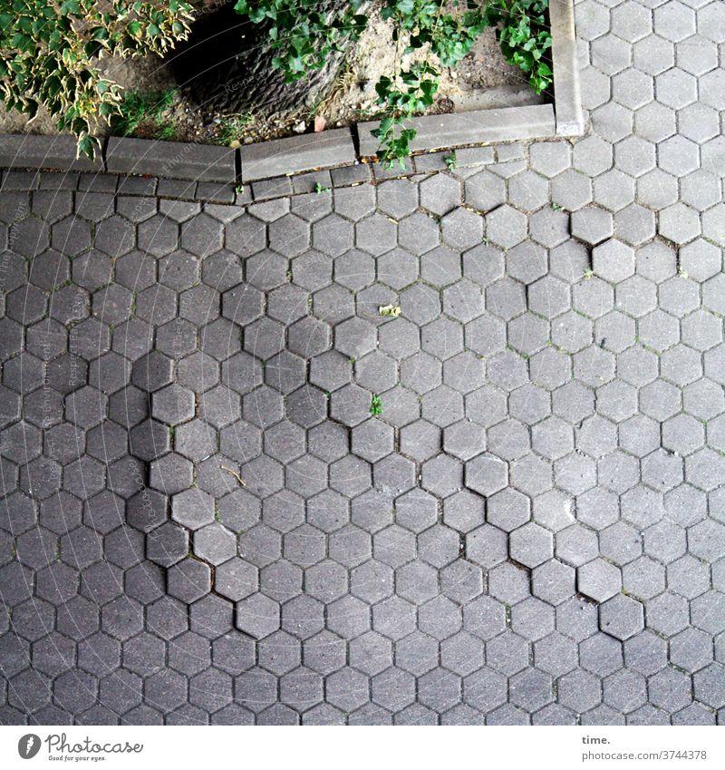 Slow Motion | Architektur und Natur pflastersteine baum wurzeln baumwurzel unterirdisch kraft natur architektur einfassung weg bordsteinkante sechseck leben