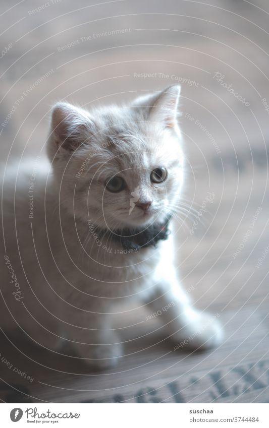 süße kleine mietzekatze (2) Katze Baby Katzenkind Katerchen jung niedlich Tier Haustier Katzenbaby Öhrchen Augen Schnurrhaare Stubentiger Tierliebe neugierig