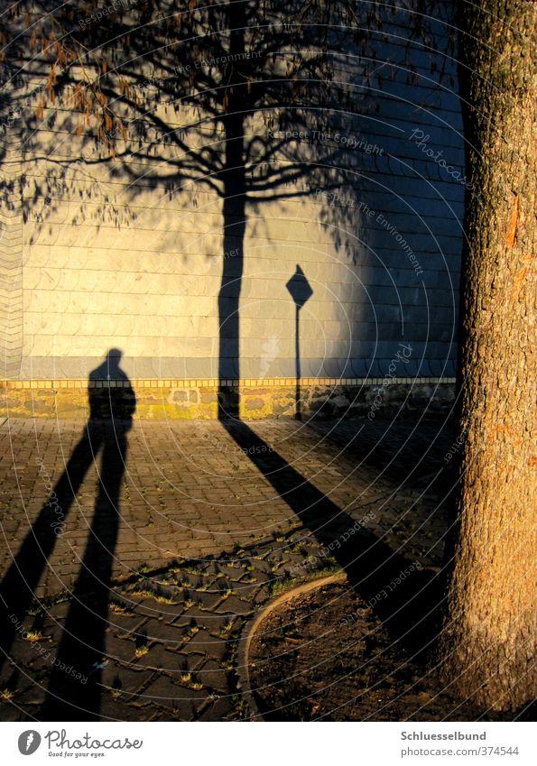 Standhaft Mensch Natur Mann schön Sonne Baum Blatt Haus schwarz Erwachsene gelb Wand Herbst Mauer grau Stein