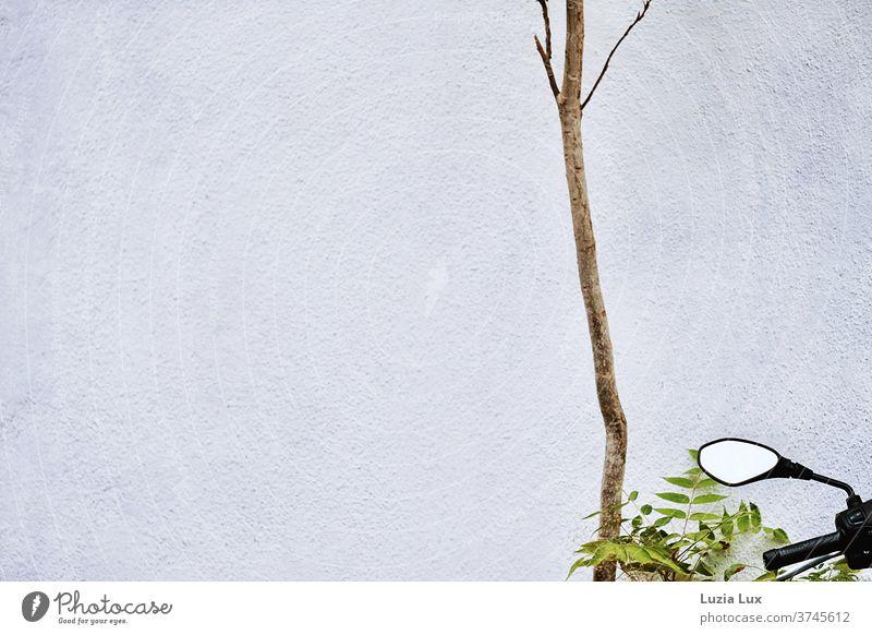 Kahles Geäst, ein wenig Grün und ein Außenspiegel vor einer Hauswand Spiegel Moped Mofa grün Laub Außenaufnahme Farbfoto Menschenleer Wand Fassade Tag Gebäude