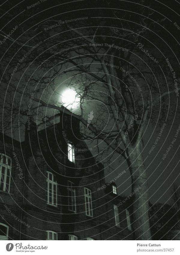 Geisterhaus Baum schwarz dunkel Architektur Mond unheimlich