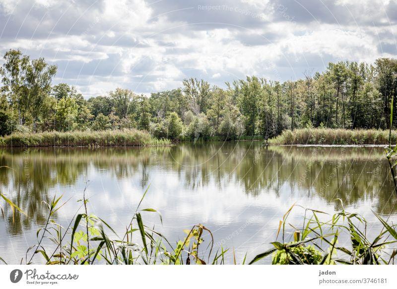 natürliche stille. See Fluss Wasser Natur Baum Reflexion & Spiegelung Landschaft Himmel ruhig Menschenleer Umwelt Seeufer Schönes Wetter Idylle Wasseroberfläche
