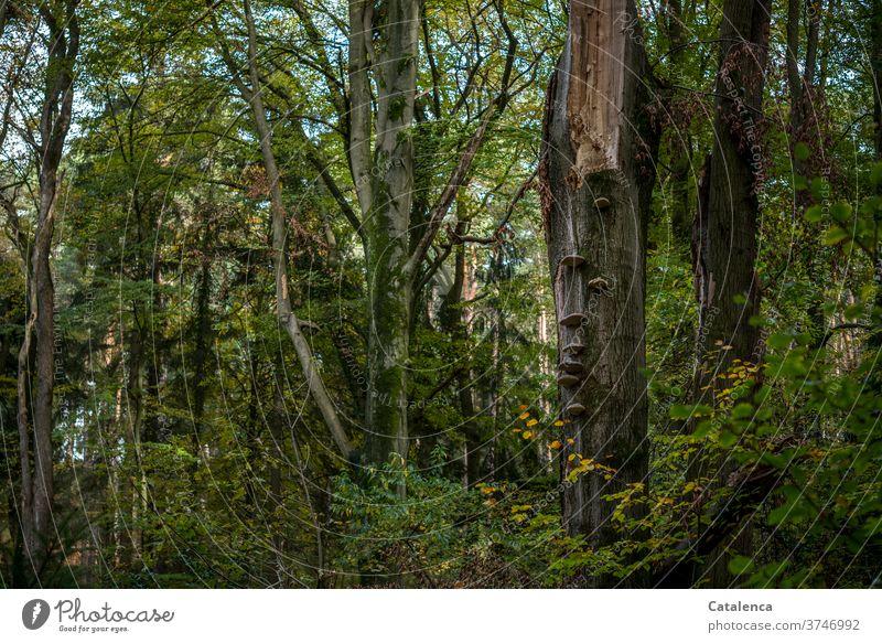 Im Wald Bäume Natur Umwelt Pflanze Grün Braun Blätter Laub kühl frisch Pilze Äste und Zweige Herbst