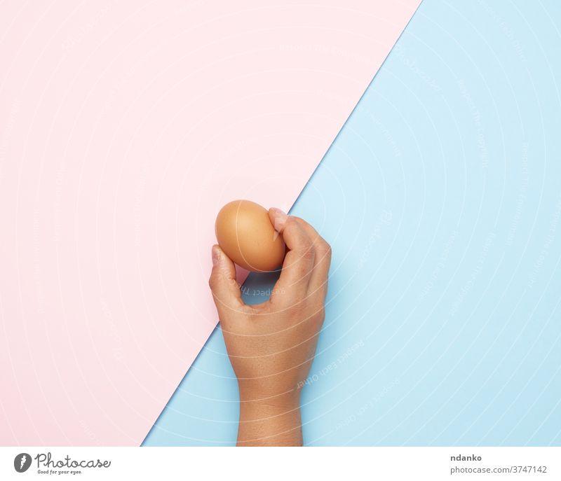 weibliche Hand, die ein ganzes braunes Hühnerei hält Ei Lebensmittel organisch blau rosa Halt Protein frisch Gesundheit Mahlzeit Natur Bestandteil Hähnchen roh