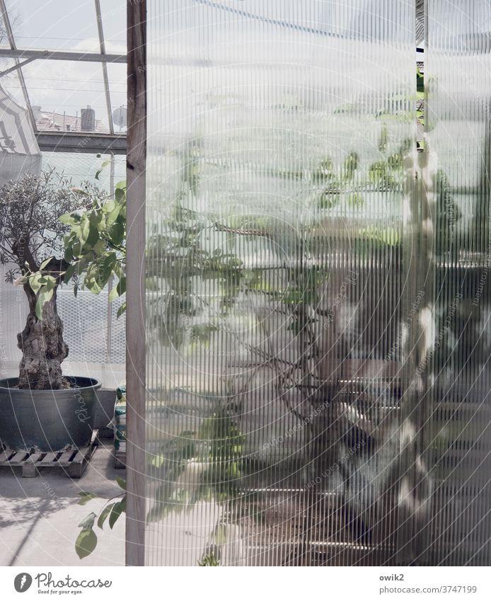 Bei Gärtners Detailaufnahme Fenster Gedeckte Farben Farbfoto Gärtnerei Glas Glaswand Strukturglas Nahaufnahme Muster Wand Strukturen & Formen abstrakt