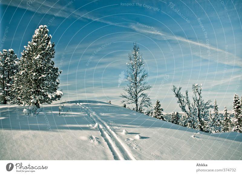Spur im Schnee Natur Ferien & Urlaub & Reisen blau Einsamkeit Ferne Winter Berge u. Gebirge Wege & Pfade Freiheit Horizont Eis Perspektive Schönes Wetter