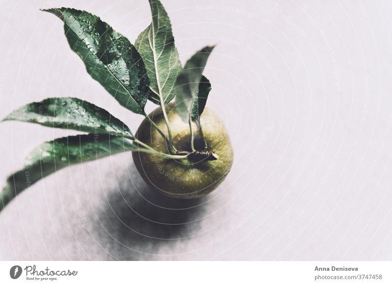 Saftige reife gelbe Äpfel Garten Apfel Ernte organisch Gesundheit Herbst frisch Lebensmittel natürlich Natur Ackerbau Frucht süß Blatt lecker hölzern Saison