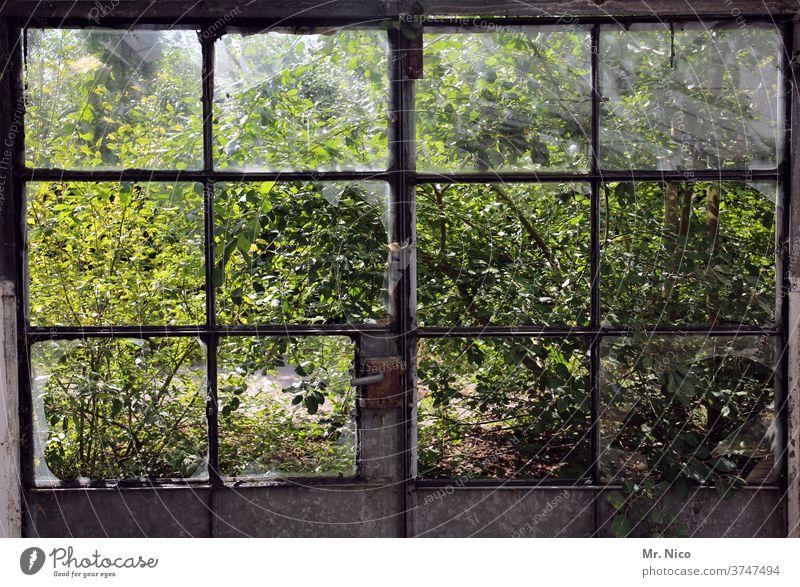 Blick in den Garten durch zerstörte Fensterscheiben Glas Fensterrahmen Tür Türgriff kaputt Verfall Zerstörung Ruine Vergänglichkeit alt dreckig durchsichtig