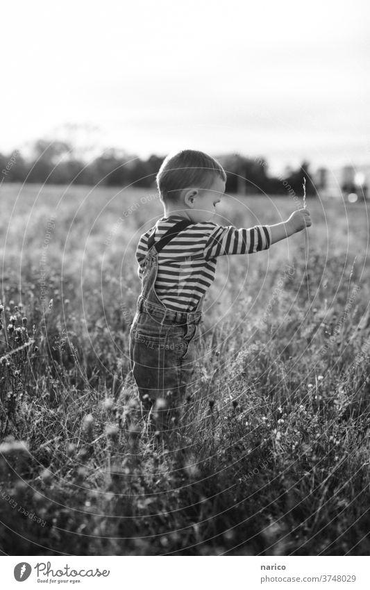 Junge steht auf einer Wiese und zieht an einem Grashalm Kind Kindheit Außenaufnahme Spielen Kleinkind Natur Schwache Tiefenschärfe Mensch Leben Latzhose