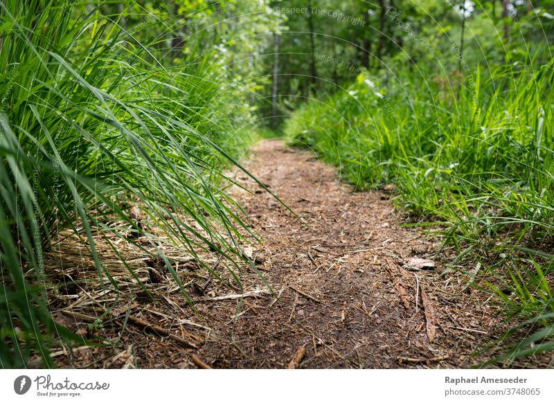 Weg durch Wald mit grünem Gras entlang Halm Boden Fußweg Nachlauf Stock Waldgebiet Laubwerk ländlich schön Schönheit Buchse Tag Landschaft Blatt Wiese natürlich