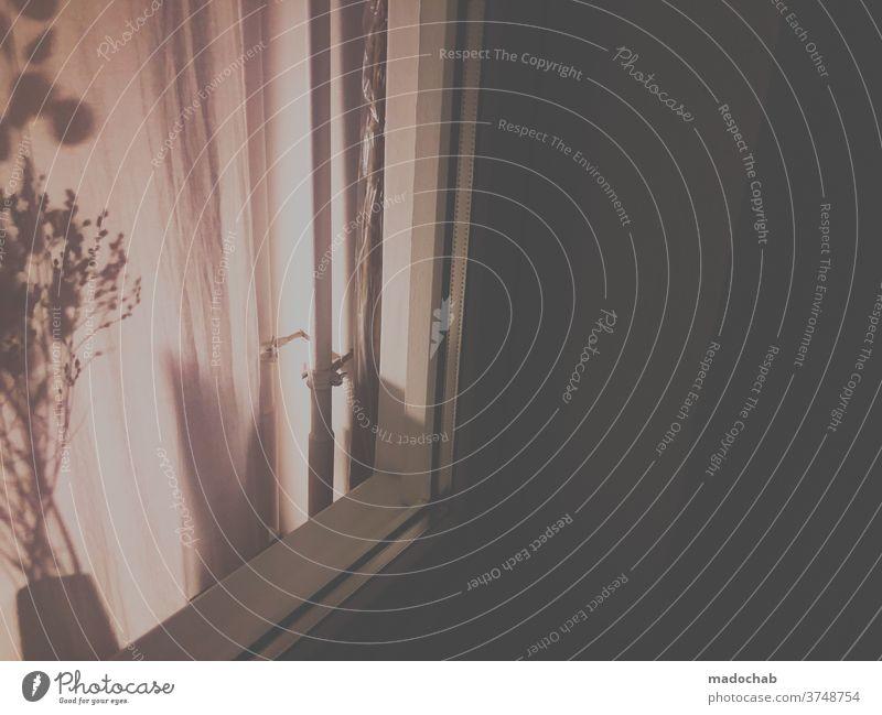 Schatten der Nacht dunkel Fenster leben wohnen Silhouette Häusliches Leben Gebäude Zimmer Einblick Pflanze Vorhang Gardine Wohnung Außenaufnahme Menschenleer