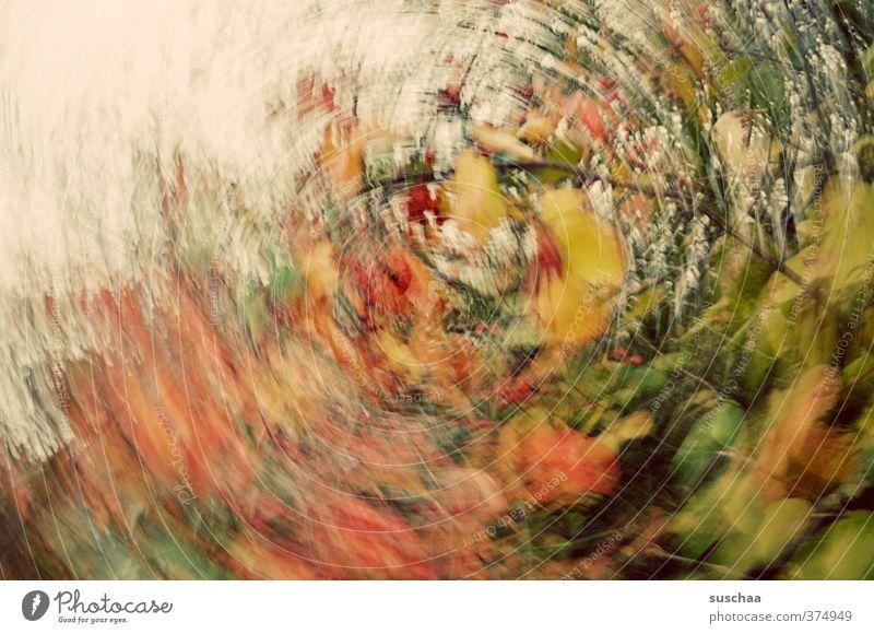 schwurbel schwurbel Kunst Kunstwerk Umwelt Natur Urelemente Herbst Sträucher Blatt Grünpflanze wild mehrfarbig Inspiration Surrealismus rund Dynamik Bewegung