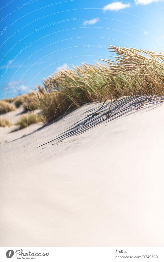 Weißer Sandstrand bei Skagen in Dänemark Strand Nordsee Küste natur landschaft nordseeküste dünen dünengras sommer urlaub erholung reise dänemark europa meer