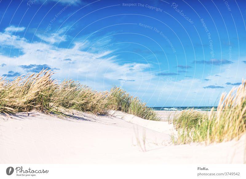 Nordseestrand bei Skagen in Dänemark Strand Küste natur landschaft nordseeküste dünen dünengras sommer urlaub erholung reise dänemark europa meer sand weiß blau
