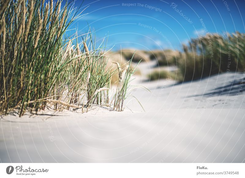 Dänischer Nordseestrand bei Sonnenschein Strand Küste natur landschaft nordseeküste dünen dünengras sommer urlaub erholung reise dänemark europa meer sand weiß