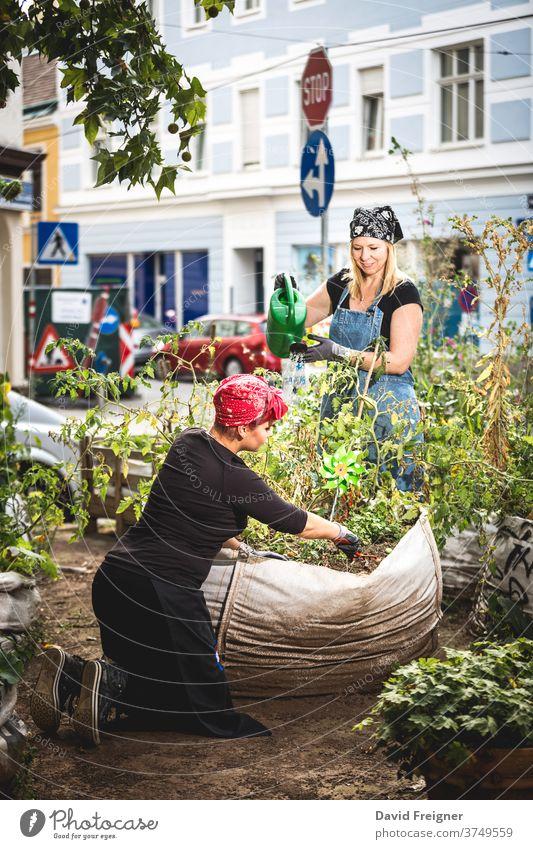 Städtische Gartenarbeit. Zwei Frauen pflanzen im Herzen einer Stadt biologisches Gemüse an. urban Großstadt Gartenbau jung 20s 30s nachhaltig lokal Konsum