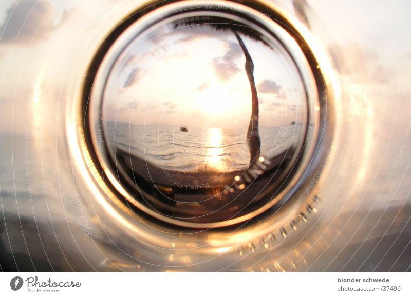 Bierglassonnenuntergang Sonne Meer Glas leer Palme Rauschmittel Los Angeles