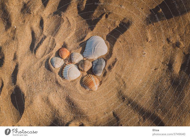 Ein Herz aus Muscheln im Sand am Strand am Meer im Urlaub. Entspannung Erholung Sommer Sommerurlaub Sandstrand relaxed Wellness Sonne Liebe Urlaubsflirt