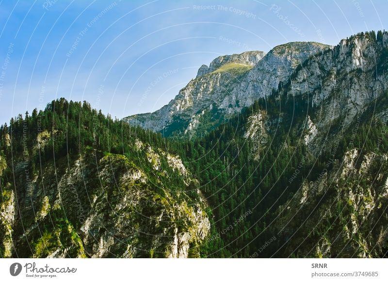 Zerklüfteter Hügel in Hohenschwangau Alpen Klippe Konifere Ökosystem Umwelt umgebungsbedingt Immergrün Tanne Tannenbaum Wald Fell-Baum Deutschland Highlands