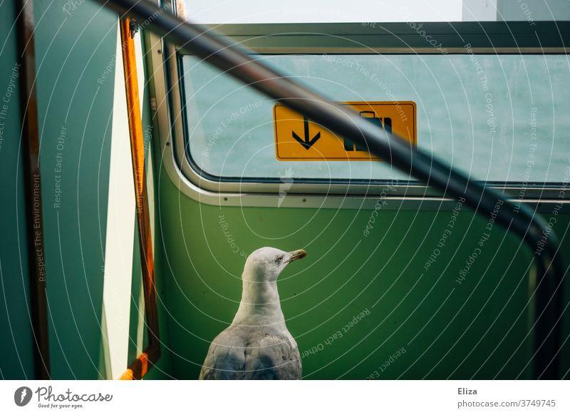 Eine Möwe auf Reisen Zug Fähre tier Vogel Freiheit neugierig auf reisen surreal skurril Ferien & Urlaub & Reisen Vaporetto Venedig Wasser unterwegs drinnen