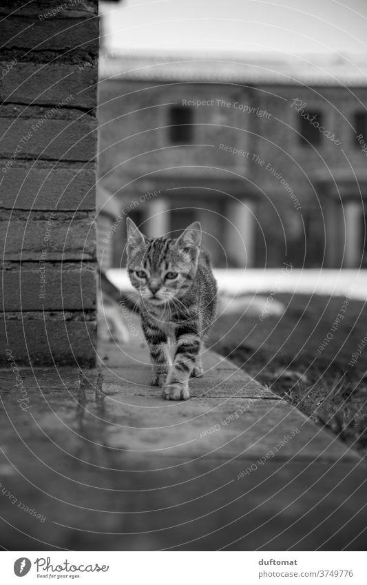 Neugieriges Katzenkind Katzenbaby Katzenauge katzenhaft Katzenkopf neugierig Neugierde Stubentieger gestreift klein jung Kind Tier Tierkind Tierbaby Haustier