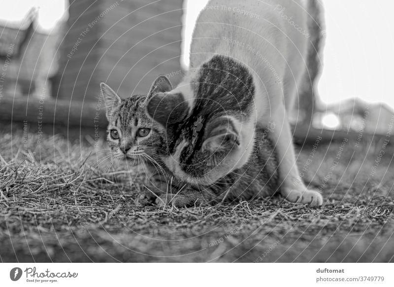 Neugieriges Katzenkind Katzenbaby erziehen Katzenauge katzenhaft Katzenkopf neugierig Neugierde Familie Mutterliebe Stubentieger gestreift klein jung Kind Tier