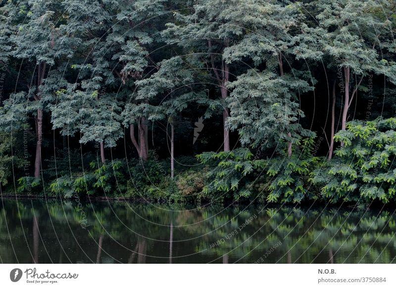 Geheimnisvoller Wald mit Spiegelung in Wasser Baum grün dunkel Menschenleer Tag Außenaufnahme Schatten Kontrast schwarz Umwelt Farbfoto Natur Pflanze