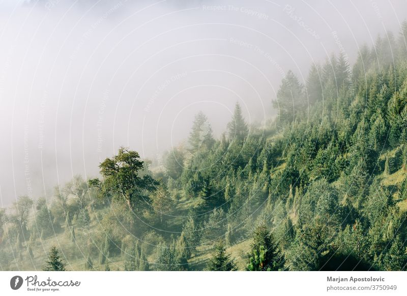 Nebliger Kiefernwald in den Bergen am frühen Morgen Abenteuer Hintergrund schön Cloud Wolken Morgendämmerung Ökologie Ökosystem Umwelt Immergrün erkunden Nebel