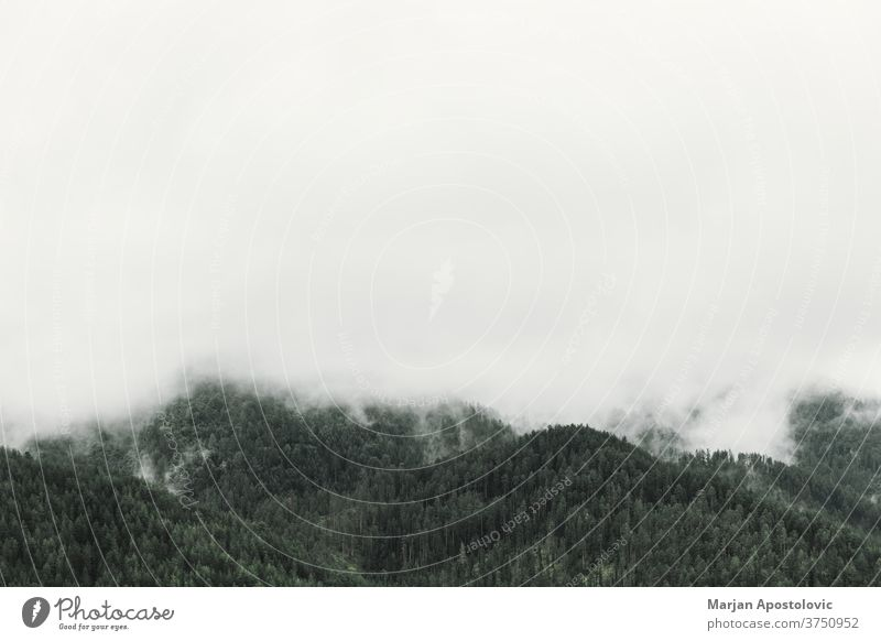 Nebliger Kiefernwald in den Bergen Abenteuer Hintergrund schön Cloud dunkel Morgendämmerung Umwelt Immergrün erkunden Nebel neblig Wald Grün Dunst hoch wandern