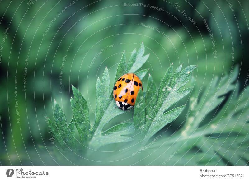 Kleiner roter Käfer auf grünem Blatt Grün Natur Umwelt nachhaltig Insekt Garten draußen Punkt Tier Fauna Flora zählen Marienkäfer Außenaufnahme Pflanze