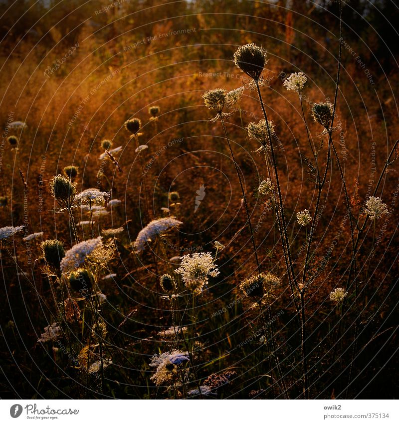Achillea Natur Pflanze Landschaft Umwelt Frühling Wiese Bewegung glänzend wild Zufriedenheit Wetter Wachstum leuchten Idylle Sträucher verrückt