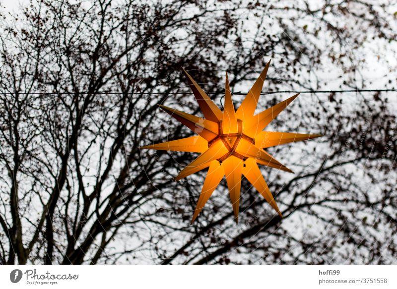 Weihnachtsbeleuchtung mit Baumfragment vor grauem Himmel Weihnachtsstern Lichterkette Weihnachtsmarkt Stern (Symbol) Spitze herrnhuter stern