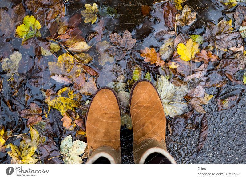 Braune Stiefel stehen in Pfütze mit buntem Herbstlaub Laub Schuhe braun Natur Wasser Regen Blätter Herbststimmung herbstlich Wildleder Leder Herbstfärbung