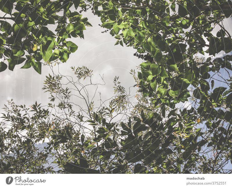 Natur Blätter Zweige Äste grün Pflanze Baum Busch Zweige u. Äste Blatt Menschenleer Umwelt natürlich Außenaufnahme Wachstum