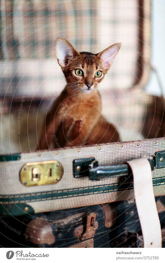 Katze im Koffer Katzenbaby Abessinier Abessinier Katzen Abessinierkatze Katzenfreund Stillleben reisen Reisefotografie Urlaub Urlaubsstimmung Urlauber rot