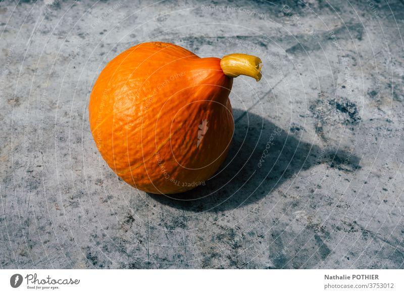 Herbstliche orangefarbene Potimarrone mit ihrem Schatten in der Sonne potimarron Farbe fallen Squash Gemüse Ernte Garten Biografie haloween Single saisonbedingt
