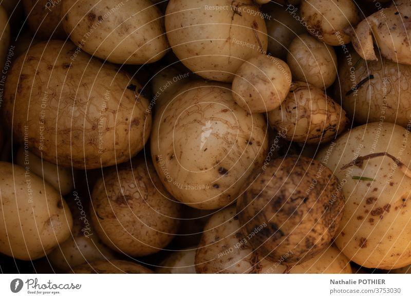 Kartoffeln in Nahaufnahme - Kartoffelernte Garten Gemüse rcolte Küche Fries organisch frisch Lebensmittel gelb Ackerbau Vegetarier roh natürlich Hintergrund