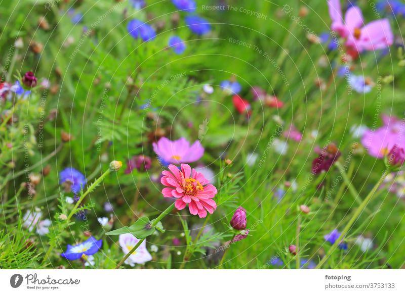 Blumenwiese Blatt Blumenfeld Wiese Blümchen Blüte Botanik Flora Gras Macro Makro Natur Naturlandschaft Pflanzen Wiesenblumen Wildblume Wildblumen Wildpflanze