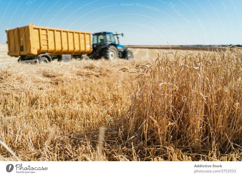 Landwirtschaftliche Maschine im Weizenfeld Traktor Feld Ackerbau Ernte abholen Saison Korn trocknen Verkehr Ackerland Landschaft ländlich Bauernhof Natur golden