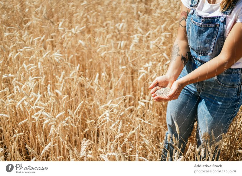 Frau mit Weizenkorn auf dem Lande Korn eingießen Feld Landwirt golden Müsli Samen Landschaft ländlich Ackerbau Ernte Bauernhof kultivieren frisch organisch