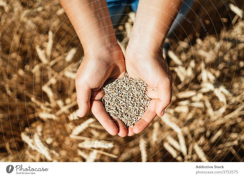 Frau mit Weizenkorn auf dem Lande Korn Halt Feld Landwirt golden Müsli Samen Landschaft ländlich Ackerbau Ernte Bauernhof kultivieren frisch organisch natürlich