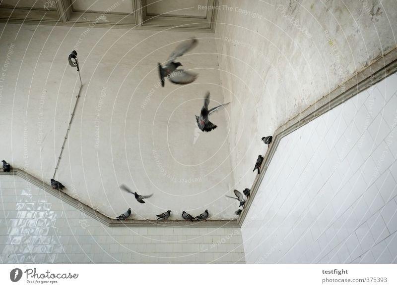 wir tauben unter uns Bauwerk Gebäude Architektur Tier Taube Tiergruppe fliegen Aufregung Politische Bewegungen Flügel Vogel Markthalle Farbfoto Innenaufnahme